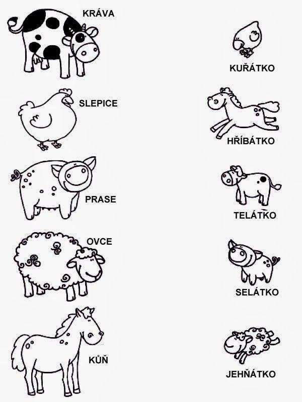 zvířata a mláďata