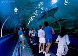 Sydney Aquarium http://buildingabrandonline.com/Radiantlifestyle/do-you-struggle-to-do-3-fun-things-in-sydney-solution-revealed-in-this-blog/