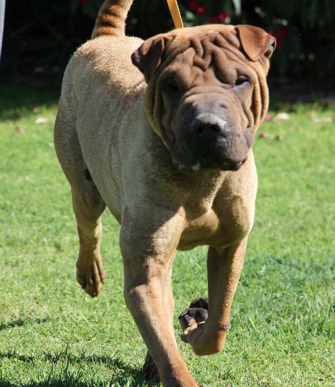 Shelter Adoption Dog In Bakersfield