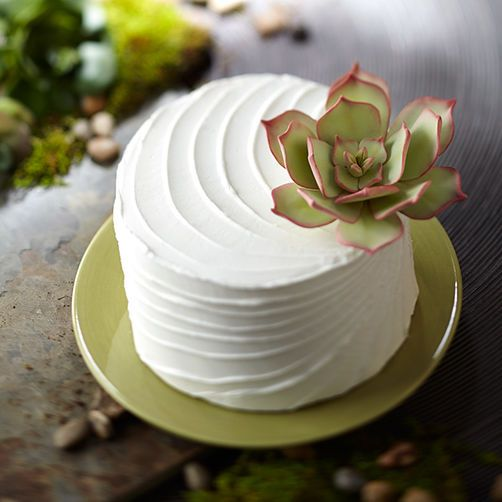 3 Ways to Make Sweet Succulent Cakes Cake tutorial, Cake ...