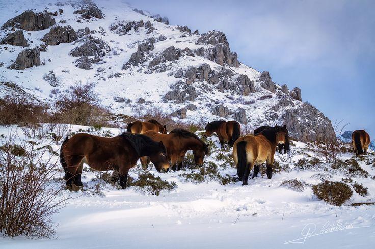 Caballos en la nieve - null