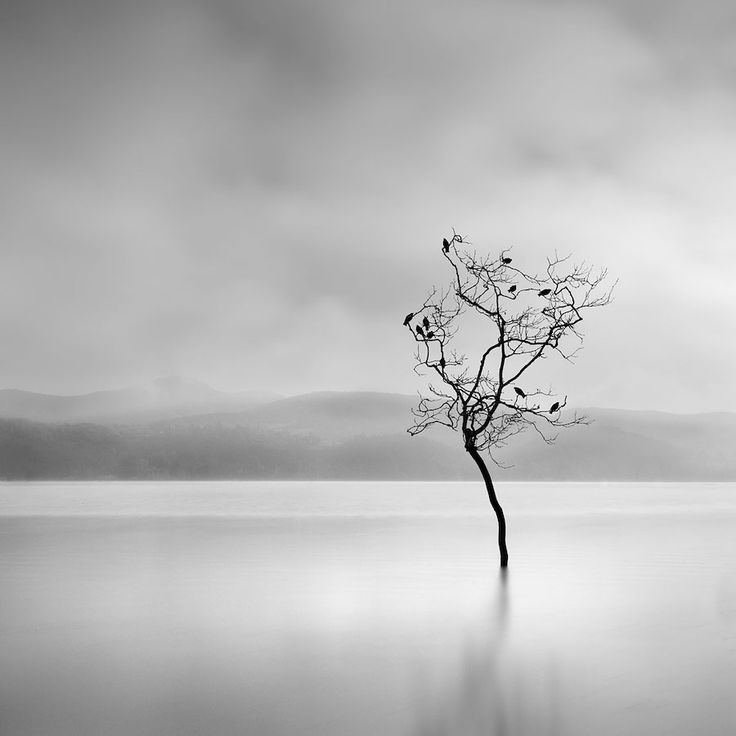 La Photographie minimaliste capte la Profondeur dramatique de la Nature en Noir et Blanc (2)