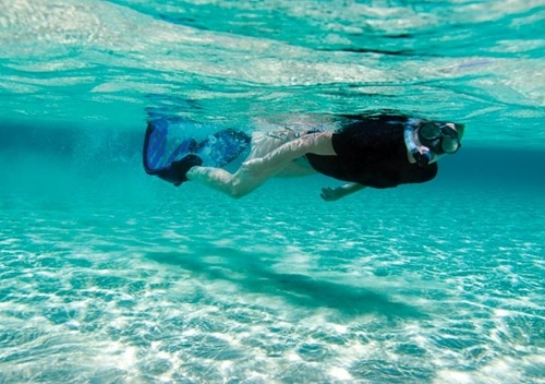 Subba diving in the clear waters