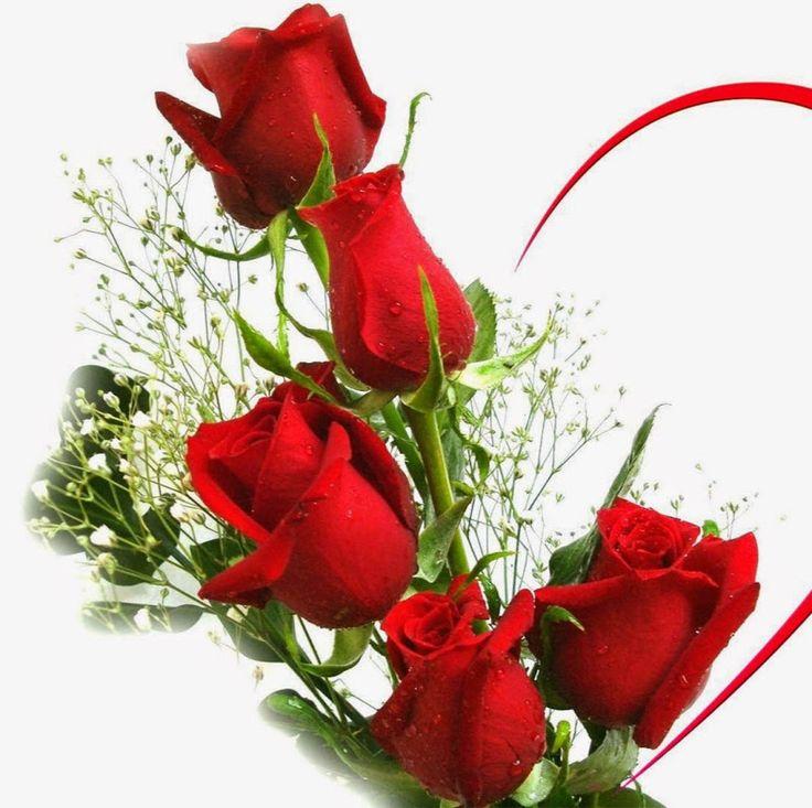 Rose Flower Love: 2055 Best Images About D' Lêh On Pinterest