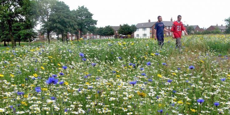 Two men walking through a wildflower meadow in an urban environment