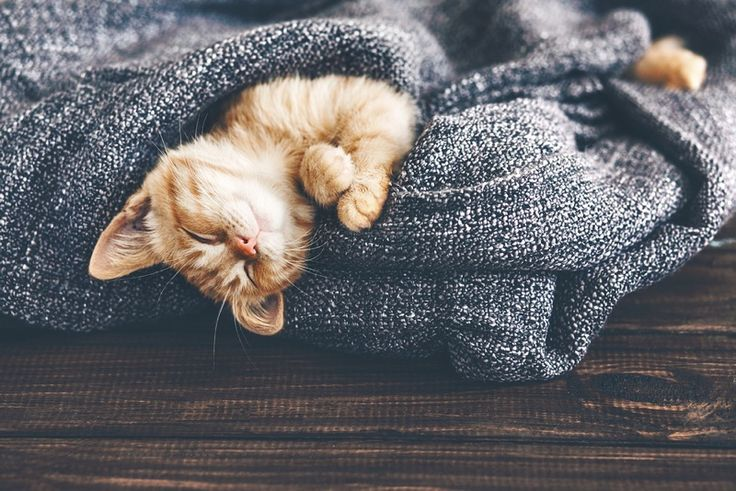 What you can learn about #introverts by watching your #cat. #kitty #introverted #quiet