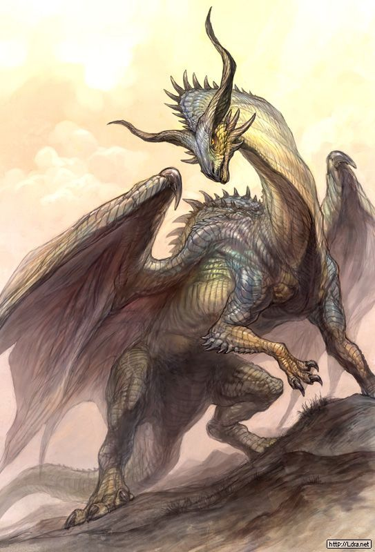 Best 25 Dragon Pictures Ideas On Pinterest White Dragon