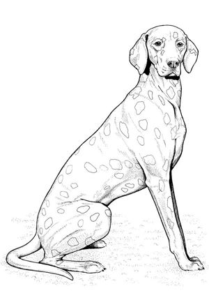 Captivating Dog Coloring Pages By YUCKLES!