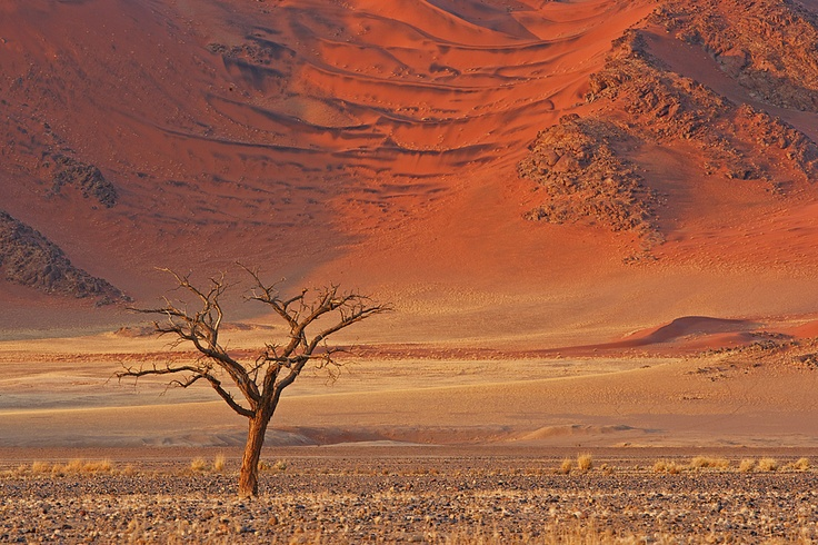 On a recent trip to Sossousvlei, Namibia, I saw a single tree with a dramatic backdrop about a kilometer from the road. I photographed it at sunset but it was not that dramatic so I went back the following morning and the sand on the mountain lit up like velvet. I placed the tree in front to give a sense of scale and desolation.