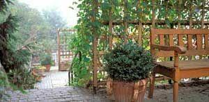 Die Rankhilfe als schöner Sichtschutz im Garten. (Quelle: imago)