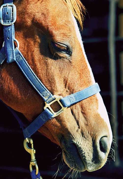 5 Things You Can Do To Help Your Horse Live a Long and Happy Life – MyHorse Daily