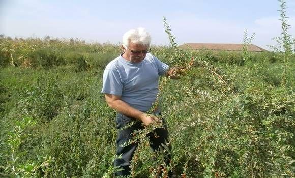 Ezt a szupernövényt kezd el termeszteni, akármekkora is a kerted, és garantált lesz a siker!!