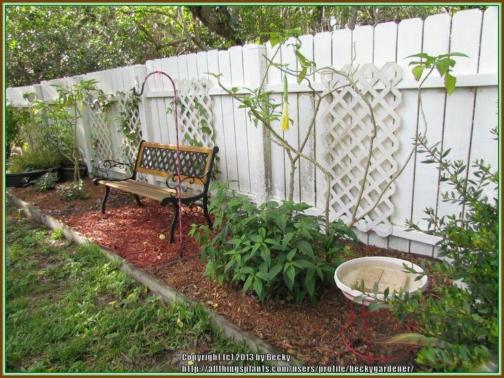 Homemade Bird Bath (All Things Plants)