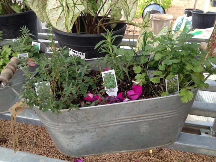 Tiny Herb Garden That S Plant Tastic Pinterest Herbs