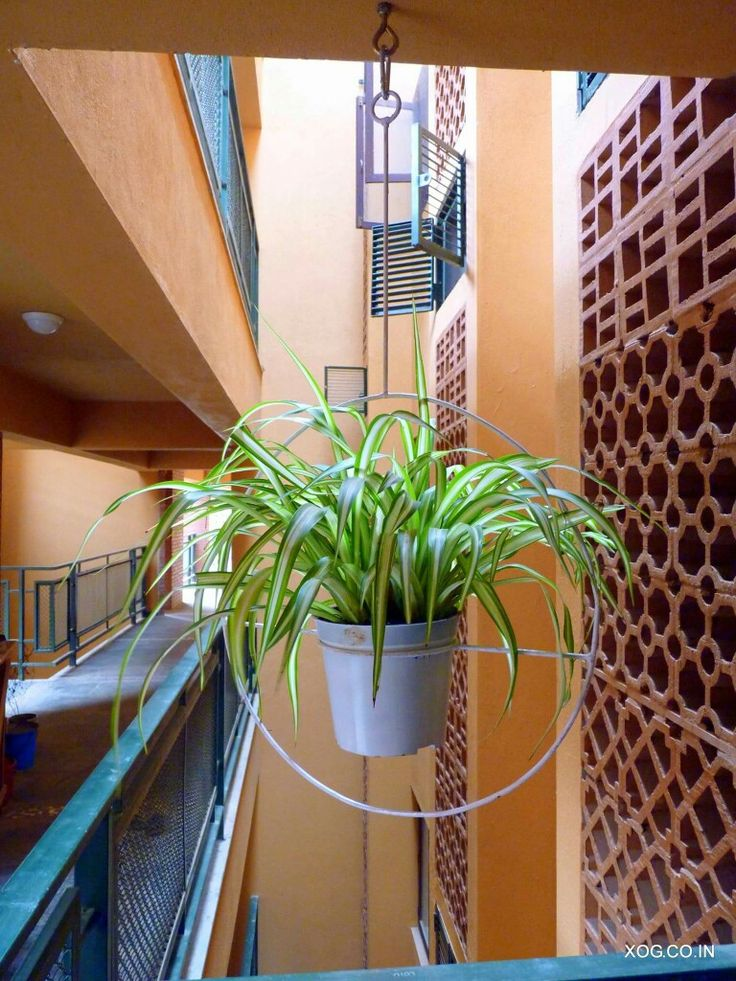 Hanging rings with Spider plants by XOG