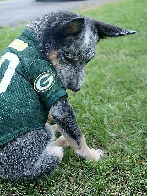 Thinking about getting my puppy one of these! Go Pack Go!