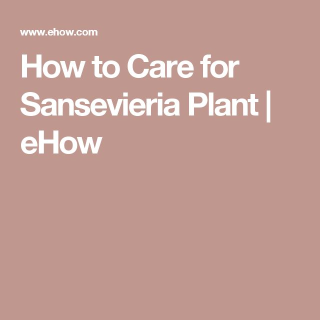 How to Care for Sansevieria Plant | eHow