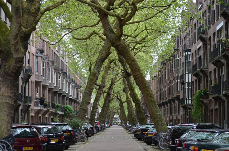An Allee of Tilted Trees, Lomanstraat at Amstelveenseweg. Amsterdam
