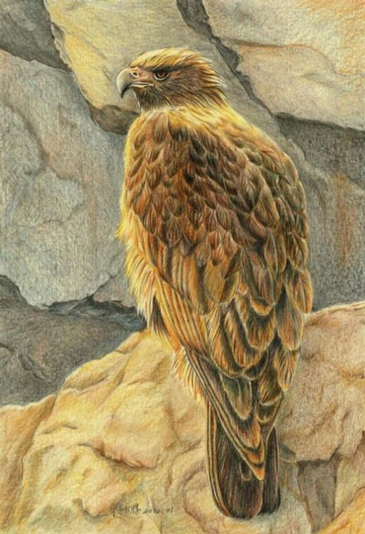 Amazing Pencil Drawing   COLORED PENCIL