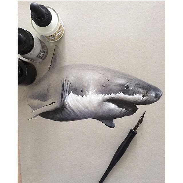 Shark painting by @art_ofthe_endangered #allforarts