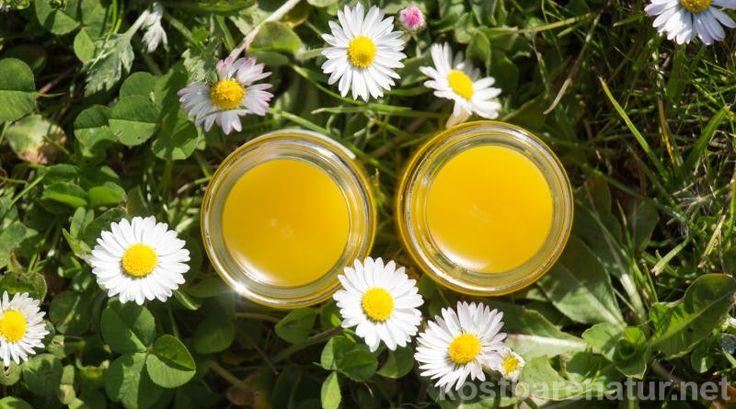 Aus einfachen Zutaten ist die heilende Gänseblümchensalbe ganz schnell hergestellt und erspart dir den Kauf teurer Wund- und Heilsalben.
