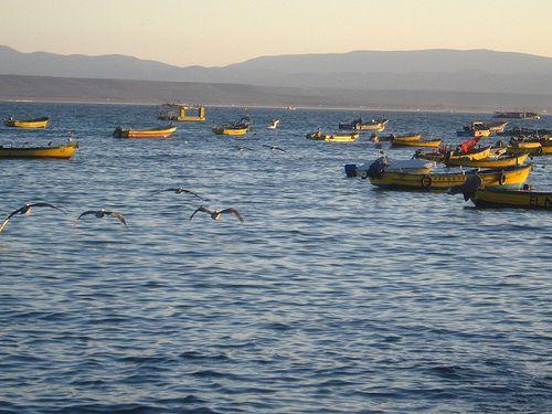 puerto de tongoy