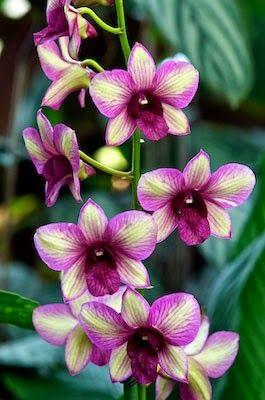 Randam Color Orchid