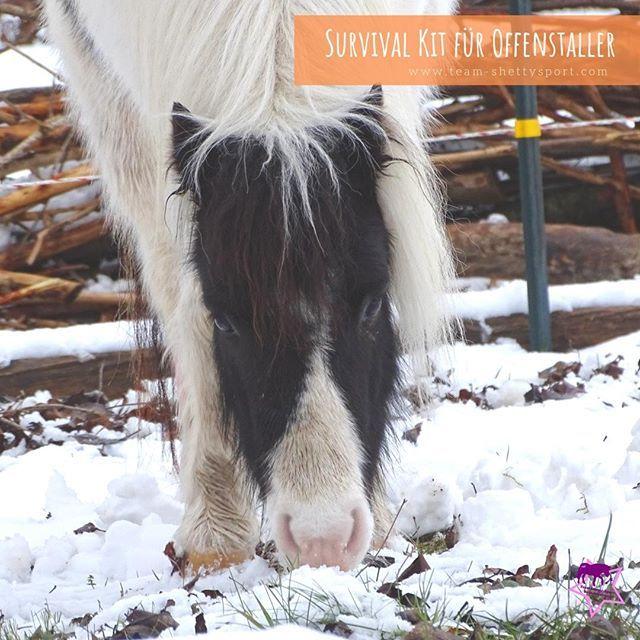 Winter Im Offenstall Die Weissen Flocken Treiben Den Meisten Selbstversorgern Tiefe Sorgenfalten Auf Die Stirn Schliesslich Erschwe Horses Animals Survival