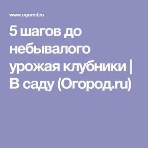 5 шагов до небывалого урожая клубники   В саду (Огород.ru)