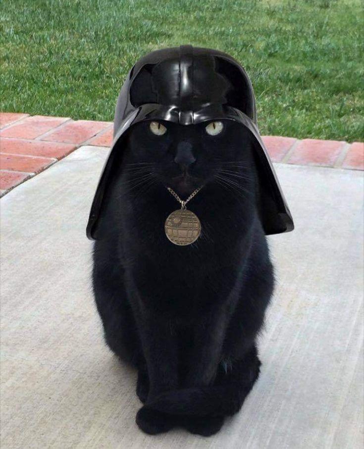 Star Wars Darth Vader hat on a black kitty cat ❤️❤️