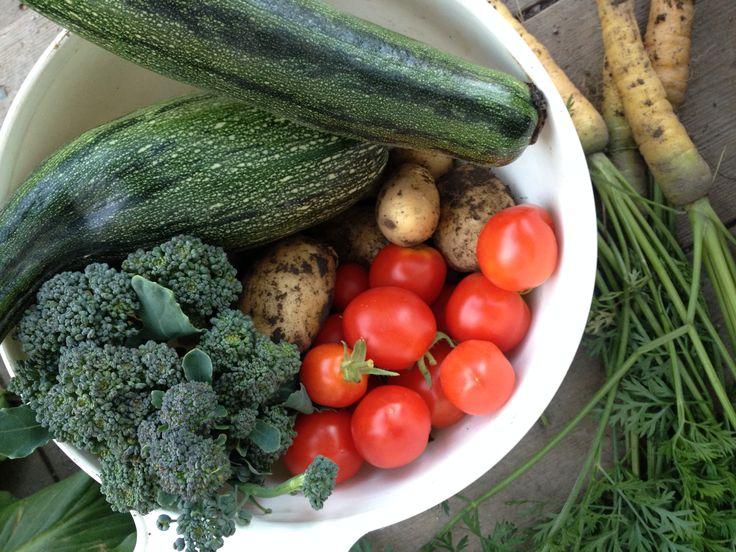 Tomatoes, broccoli, potatoes, carrots, zucchini.