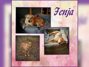 Fenja ist super gut auf ihrer tollen Pflegestelle in Freinsheim angekommen. Sie sucht ihre Familie  Fenja ist eine super liebe Hündin von knapp 7 Jahren. Sie hat eine Schulterhöhe von 50 cm und wiegt 18 kg. Fenja ist super verschmust und mag alles und jeden. Fremden Hunden und Menschen draußen begegnet sie super freundlich. Sie geht gut an der Leine und ist völlig unkompliziert. Fenja ist kastriert gechipt und geimpft und wird nur nach VK und mit Schutzvertrag vermittelt.  Anfragen bitte NUR…