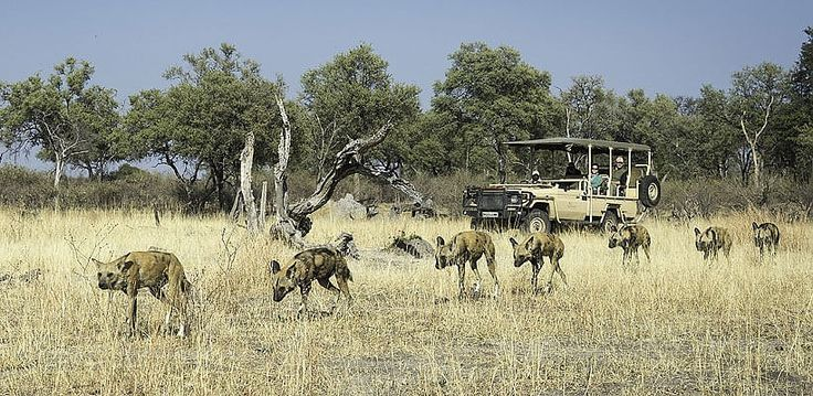 Tracking wild dogs on the hunt