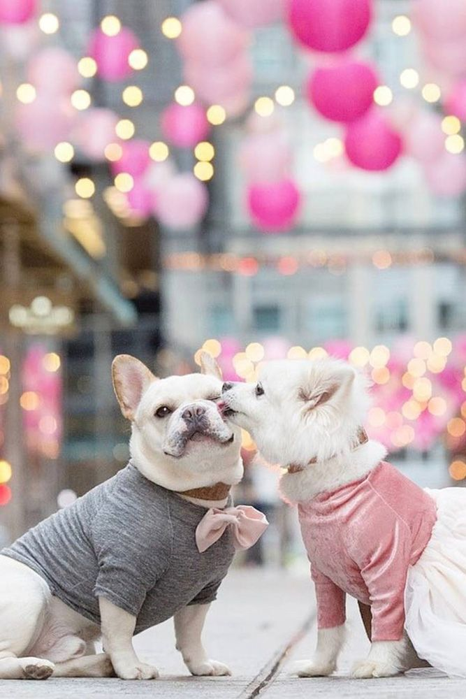 36 Gorgeous Photo Ideas Of Wedding Pets For Your Album ❤ See more: http://www.weddingforward.com/wedding-pets/ #wedding #photography