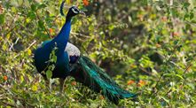 Visit Beautiful destinations in India