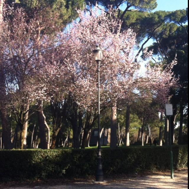 Garden La Piazza: 17 Best Images About Villa Borghese Gardens On Pinterest