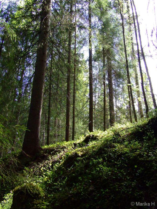 Kellaripuro, Finland. Forest, trees, woods