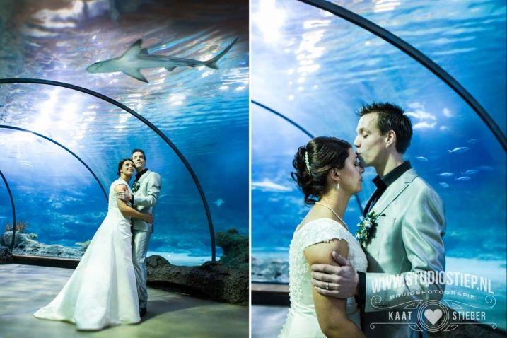 Trouwen in Blijdorp #wedding #zoo #fish #blijdorp #bruiloft #dierentuin amazing wedding photography in #aquarium