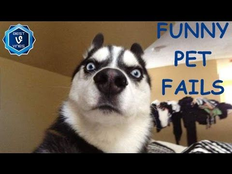 Funny Animal Fails Compilation - Best Cat, Dog Fail Vines 2016 - http://positivelifemagazine.com/funny-animal-fails-compilation-best-cat-dog-fail-vines-2016-2/ http://img.youtube.com/vi/FP8nm4_YTkU/0.jpg  Please leave a like if you enjoyed and tell us what you think about the video in the comments, Thanks! Also Check Out: KingBach Vines Compilation: … ***Get your free domain and free site builder*** Click to Surprise me! Please follow and like us:  var addthis_con