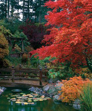 Enchanting Japanese Maples: Backyard Ideas, Japanese Maple, Japanese Gardens, Trees, Japan Maple, Autumn Colors, Bridges, Japan Gardens, Enchanted Japan