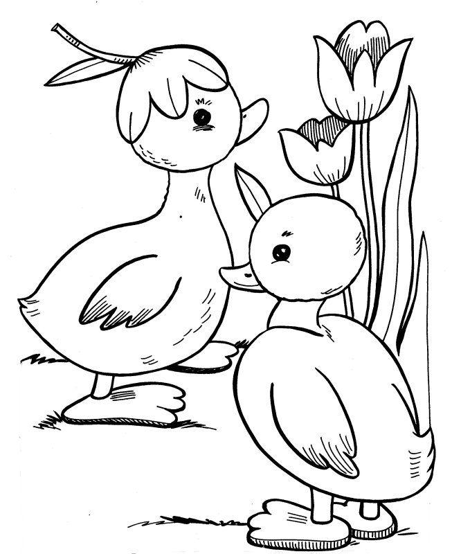ducks among the tulips