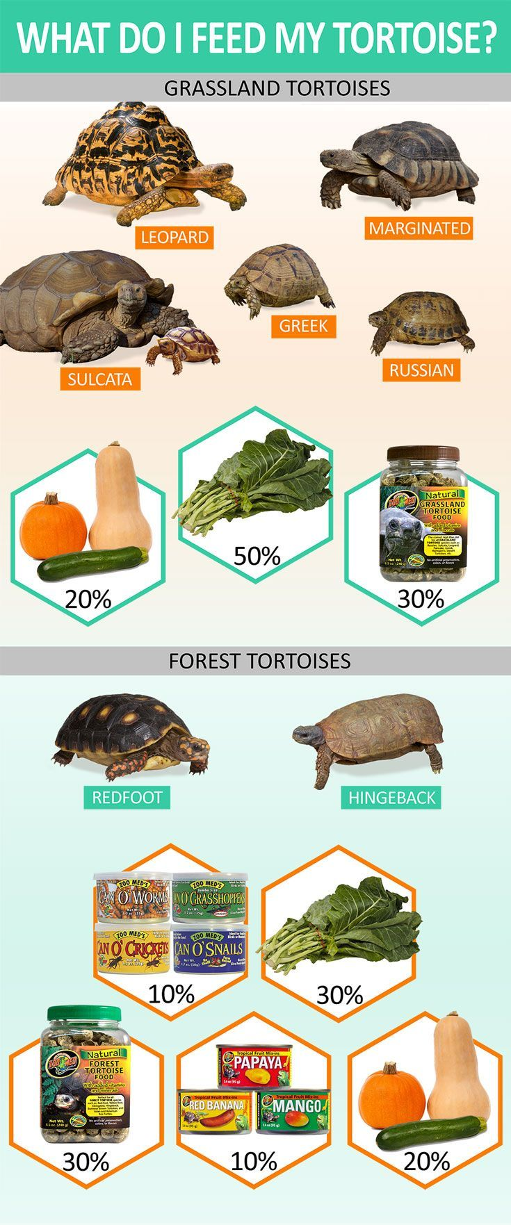Know what to feed your tortoise depending on what type it is. Grassland Tortoises diet should consist of 10-20% chopped or shredded veggies, 50-60% fresh greens, and 30% Grassland Tortoise pellets soaked in water. Forest tortoises diet should be 10% animal protein (such as Zoo Med Can O' insects), 30% fresh greens, 30% Forest Tortoise pellets soaked in water, 10% fruit (fresh or mix ins), and 20% chopped or shredded veggies.