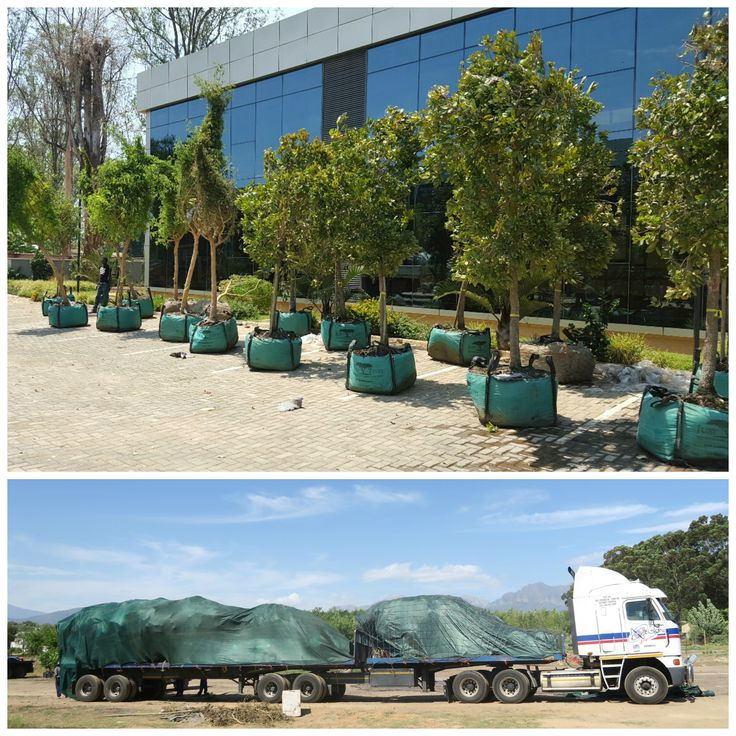 A couple of weeks ago these 400L Trichilia emetica, Acacia galpinii and Syzygium cordatum arrived safely and in good condition in Lusaka, Zambia!