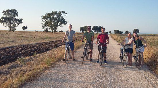 Radtour zwischen alten Olivenbäumen
