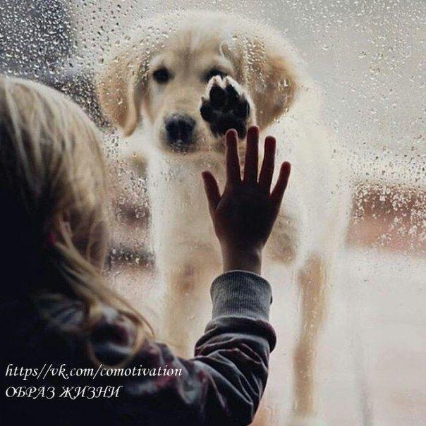 Никогда не суди с первого взгляда ни о собаке, ни о человеке, потому что простая дворняга может иметь добрейшую душу, а человек приятной наружности может оказаться редкой сволочью.