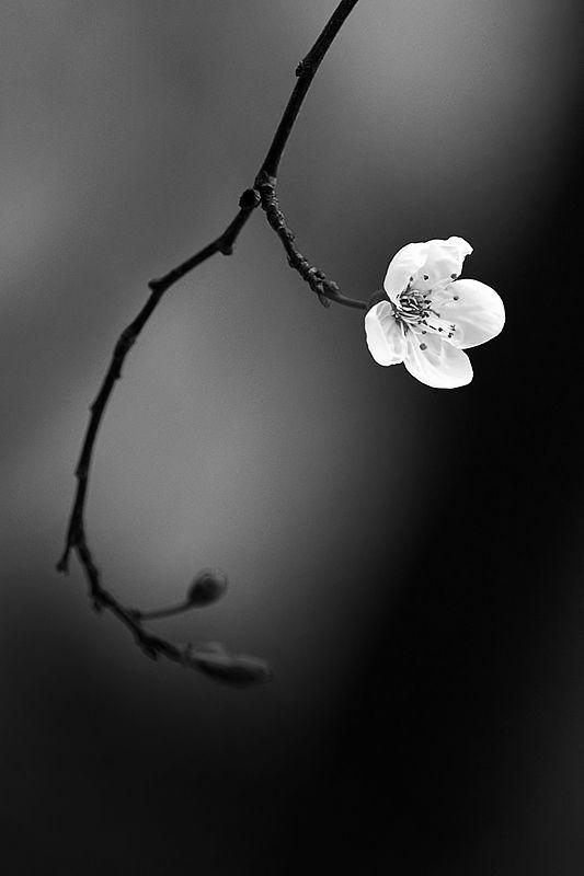 #inspiracion #lifeama #minimalismo