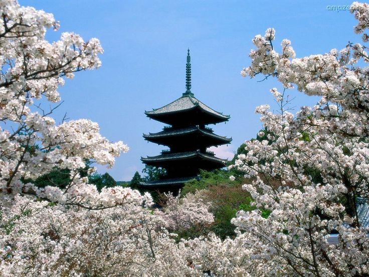 Japan  - japan wallpaper: Cherries Blossoms, Japan Wallpaper, Temples, Favorite Places, Beautiful Places, Blossoms Trees, Kyoto Japan, Cherry Blossoms, Japan Travel