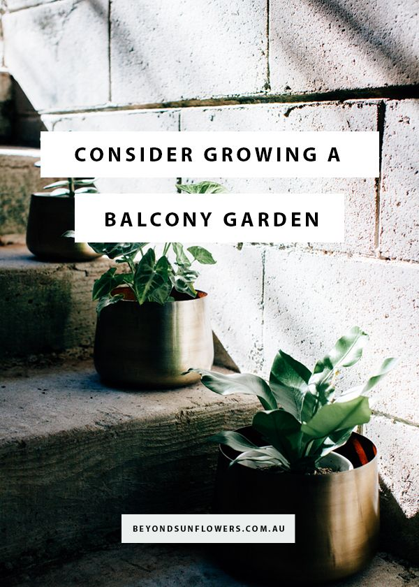 CONSIDERING GROWING A BALCONY GARDEN? The trick to getting your balcony to look green is in understanding the conditions of your space and working out what plants will suit the environment. The main obstacles you will face are wind, rainfall and light levels (direct sun or no direct sun).