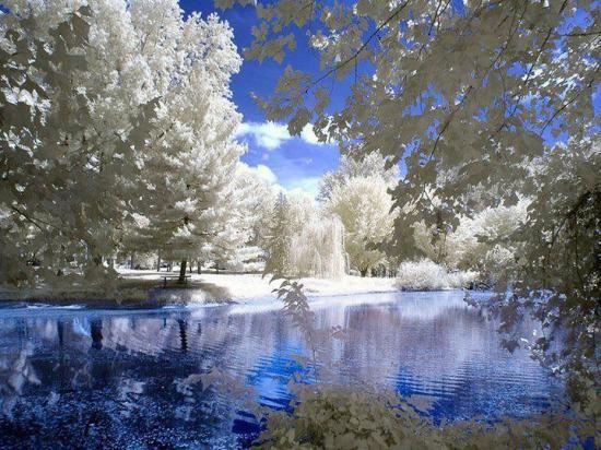 Paysage de neige Omraam Mikhaïl Aïvanhov L'amour et la sagesse s'unissent pour donner naissance à la vérité. L'amore e la saggezza si uniscono per generare la verità.