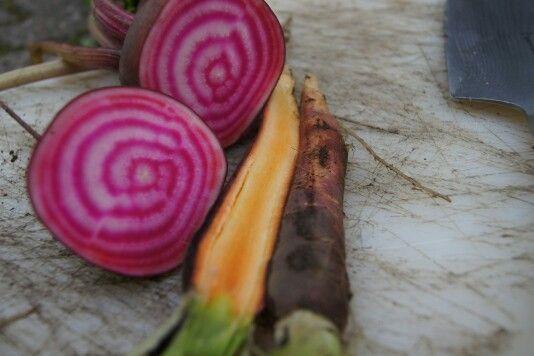 Hier seht ihr leckere #Beete und lila #Karotten frisch geerntet.  #yummy #healthyfoodporn #foodie #foodporn